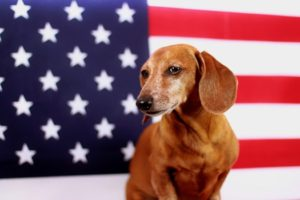 weiner dog 4th of july